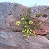 Yellow flowers - blurry