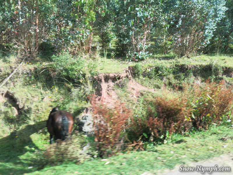 May 10, 2016  Horse drinking water in a ditch (taken from bus)