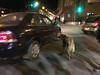 Dog waiting to cross