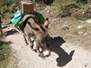 May 15, 2016   Burro and his shadow