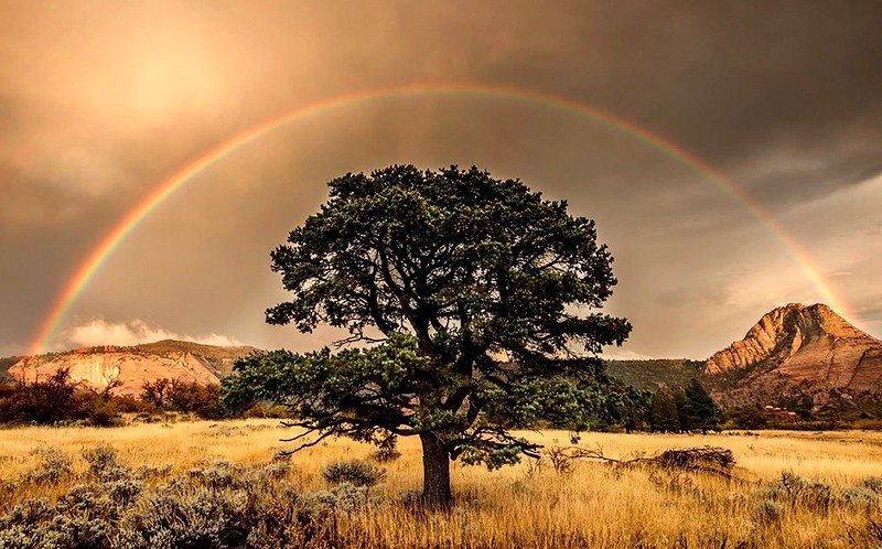 Rainbow appears @ Zion National Park...