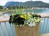 July 4, 2016  Flowers along the pier