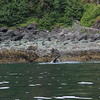 Juneau 10