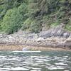 Juneau 07