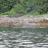 Juneau 08