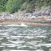 Juneau 06