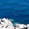 07 Seals; at Tswassen Ferry Dock