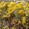 High-desert flora