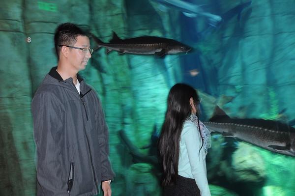16-10-13 Downtown Aquarium