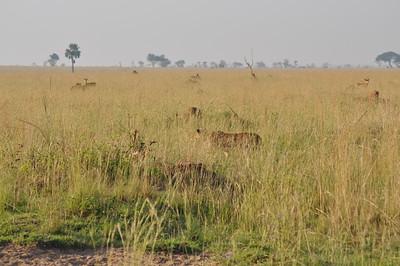 Lion Hunting