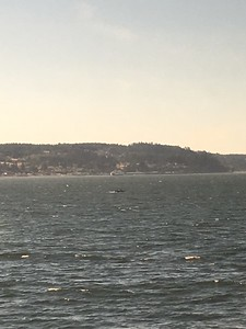 That's Whidbey Island and the ferry coming from Clinton (Columbia Beach!)