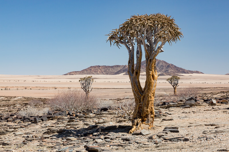 View of the ancient riverbed in the north of Namibia