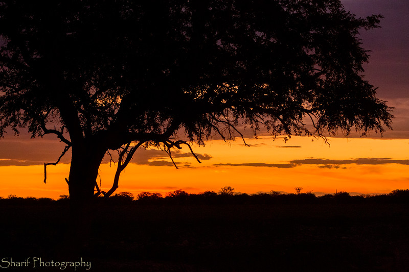 Tree near watering hole in sunset