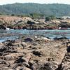 Harbor seals keeping an eye on us.