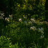 8  G Garvan Woodland Gardens
