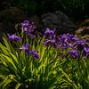 6  G Garvan Woodland Gardens