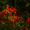 4  G Garvan Woodland Gardens