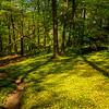19  G Garvan Woodland Gardens