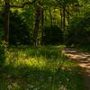 24  G Garvan Woodland Gardens Trail