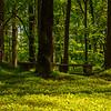 13  G Garvan Woodland Gardens Bench
