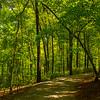 28  G Garvan Woodland Gardens Trail