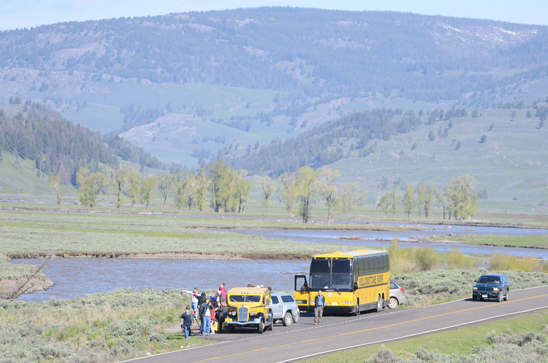 A crowd gathers to watch the wildlife in the Lamar valley