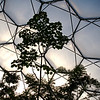 Looking skyward in the Humid Tropics biome at Eden.  The trees almost touch the roof.