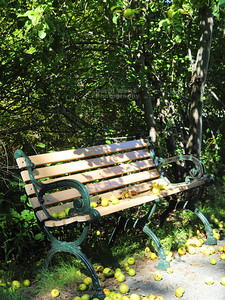 Bench with Apples