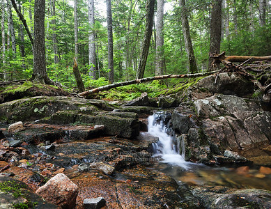 Hadlock Brook and Forest