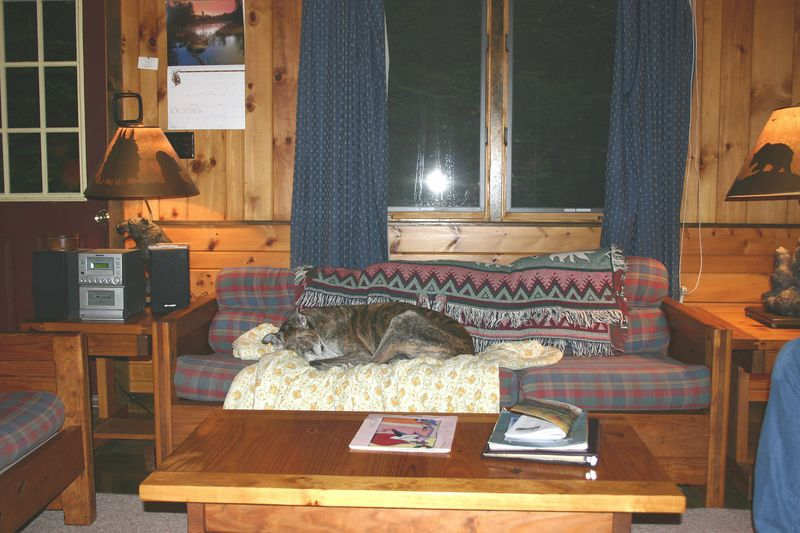 April Melody cabin at Hohmeyer's Lodge; Kozi making himself at home