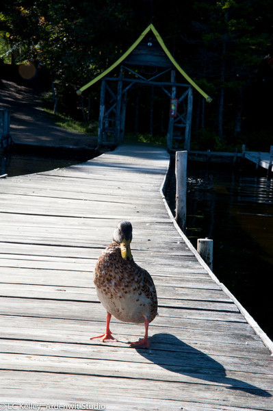 The dock is duck property. Fortunately they allowed taller two-legged interlopers, even ones with cameras.
