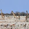 Giraffe and antelope