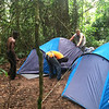Our tents going up in the Nsutu Forest.