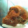 Skull of early homonid.