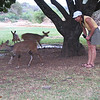 Kim with Bushbucks at Letabe Camp, Kruger NP.