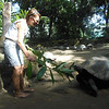 Kim tries feeding one of the endemic giant tortoises.