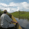On our boat trip though the papyrus marsh on the shore of Lake Victoria in search of the Shoebill.