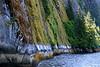 Moss-covered cliffs