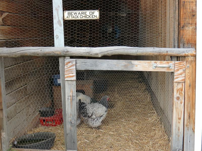 Day 18 - Chicken to Dawson City (12)