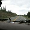 Day 6 Glennallen to Portage (11)