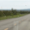 Day 6 Glennallen to Portage (5)