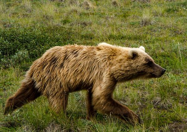 Alaska Denali