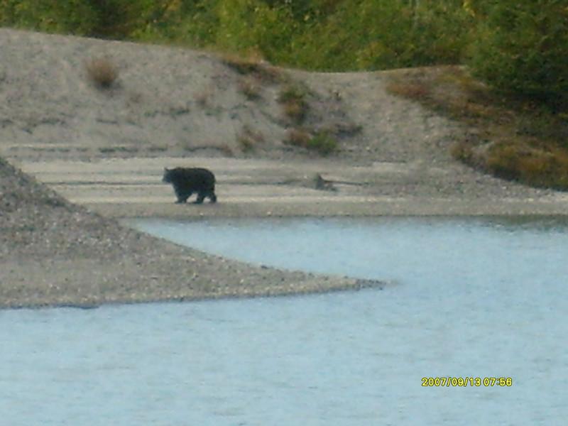 Bear sighting at Mendenhall Glacier.