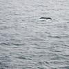 52  G Whale Fin