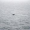 55  G Whale Fin