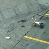 Glaucous-winged Gull @ Seattle-Tacoma International Airport (SEA)
