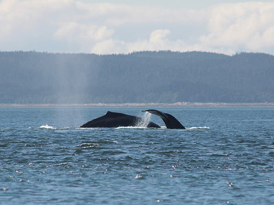 IMG_0058_whaletail_crop