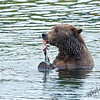 _DLS4357-Grizzly-snack