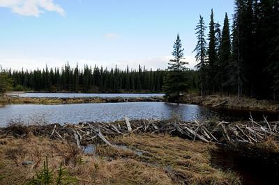 Beaver dams on Horseshoe Lake. Unfortunately we didn't see any beavers themselves.