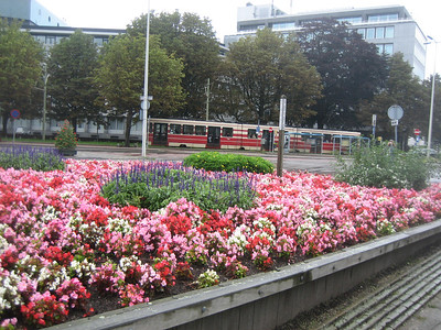 Flowers and public transit -- two common sights in Holland.  Den Haag